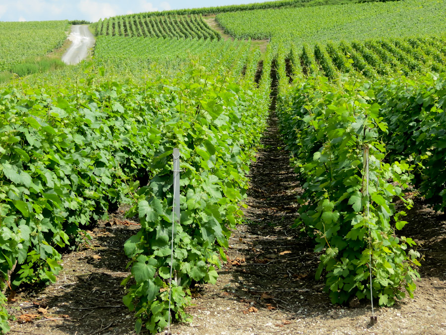 Champagne France, fungicide and pesticide spraying