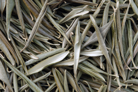 The Healing Powers of Olive Leaves