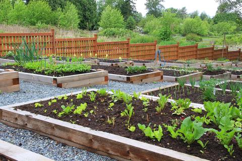 Friday's Farm Fact – Urban Farming: Not Just an Urban Legend