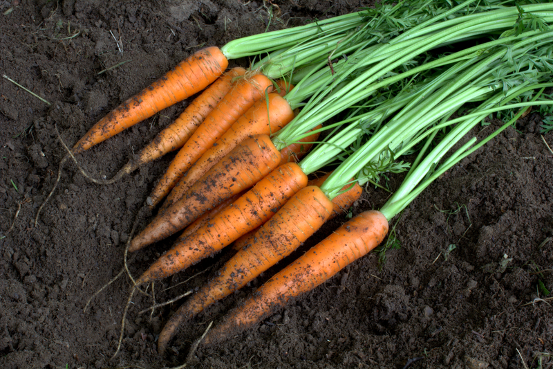 http://www.dreamstime.com/stock-image-new-harvest-fresh-organic-carrots-soil-image25248811
