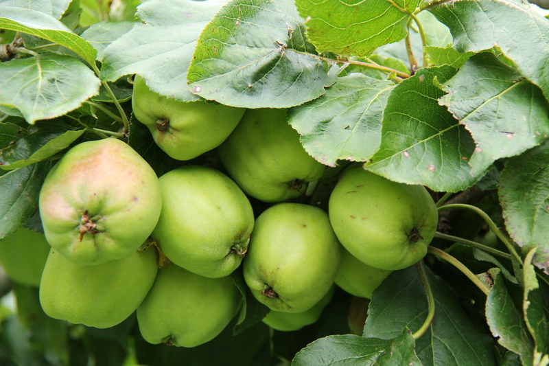 Tips for Growing Organic Fruit