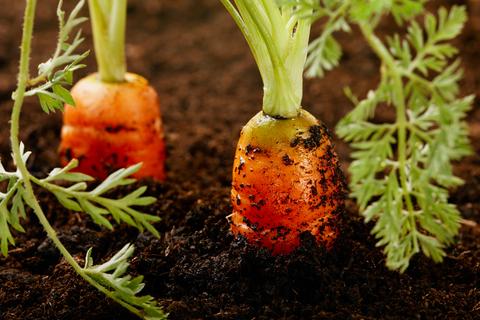 Organic Farming Improves Soil Quality, Ensures Sustainability