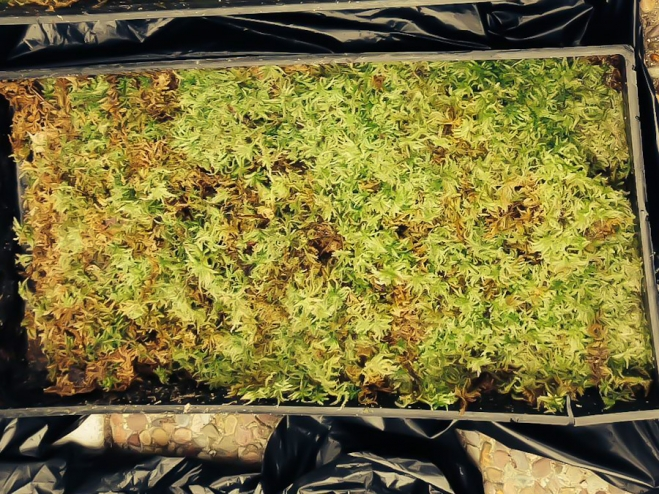 Sphagnum Moss is the raw material in Seagate