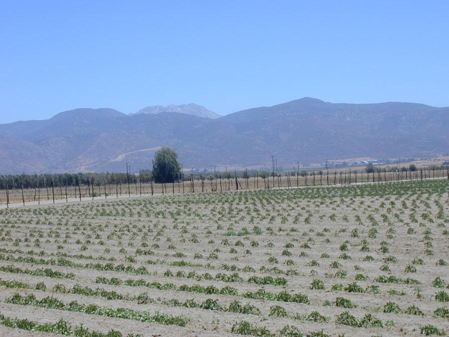 Seagate farm