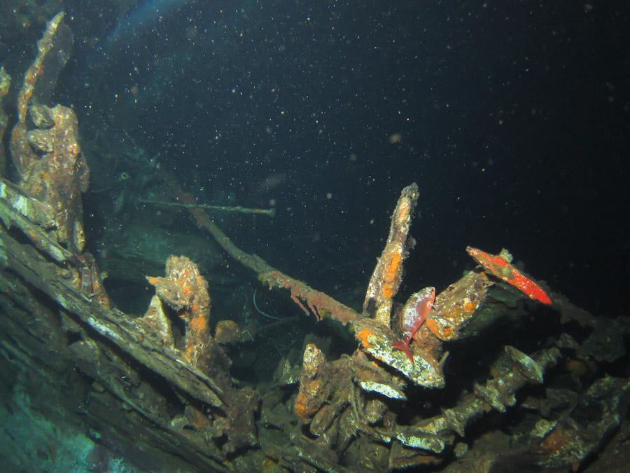 Night wreck-diving off Bonaire
