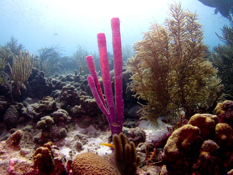 Coral Garden off Bonaire