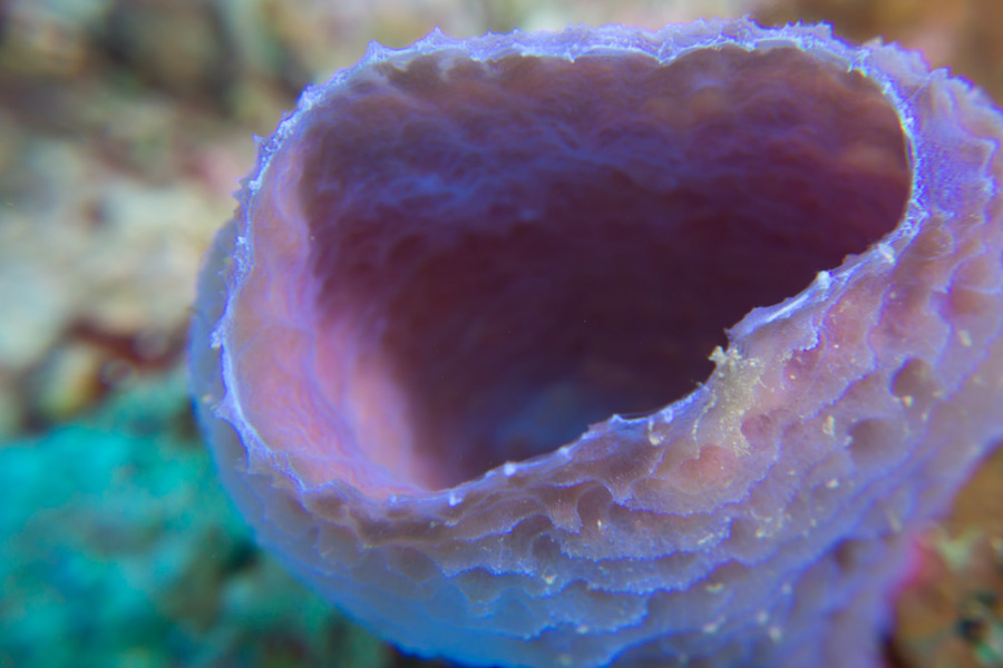 Macro photography - Coral tube off Belize