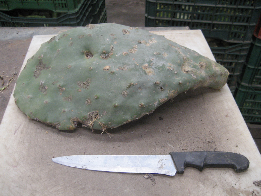 Other Benefits of Nopal Cactus and How to Eat It