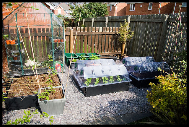 How Gardening Improves Your Health, Budget & Community