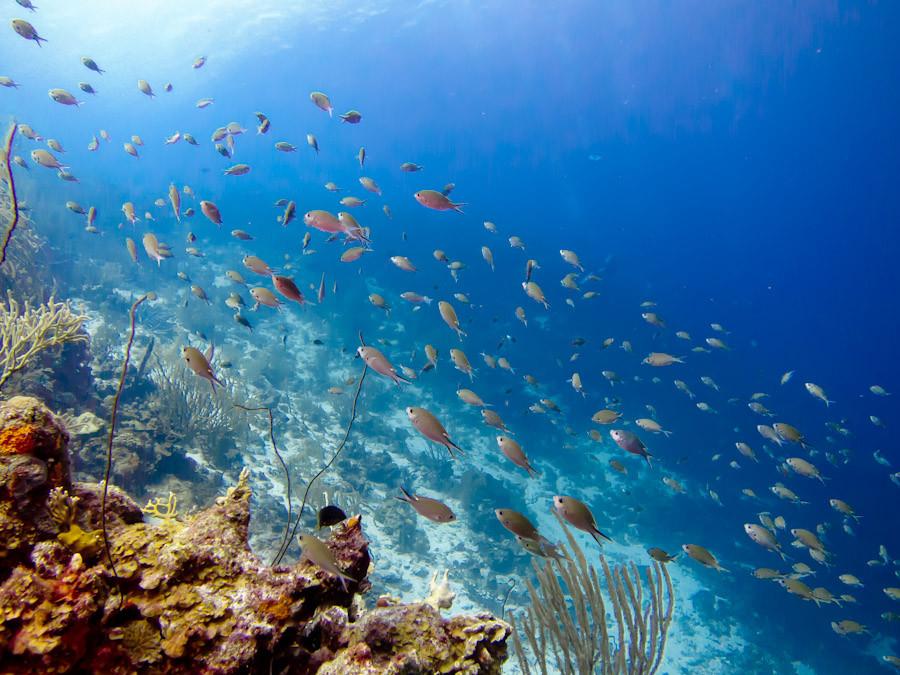 Healthy Coral reef, Bonaire