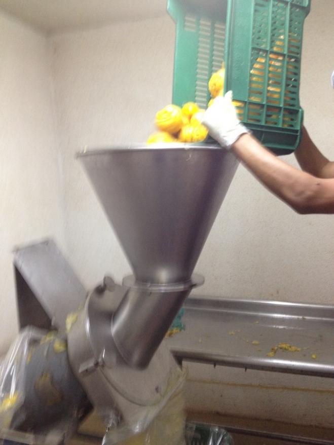 Washed lemons being fed into grinder