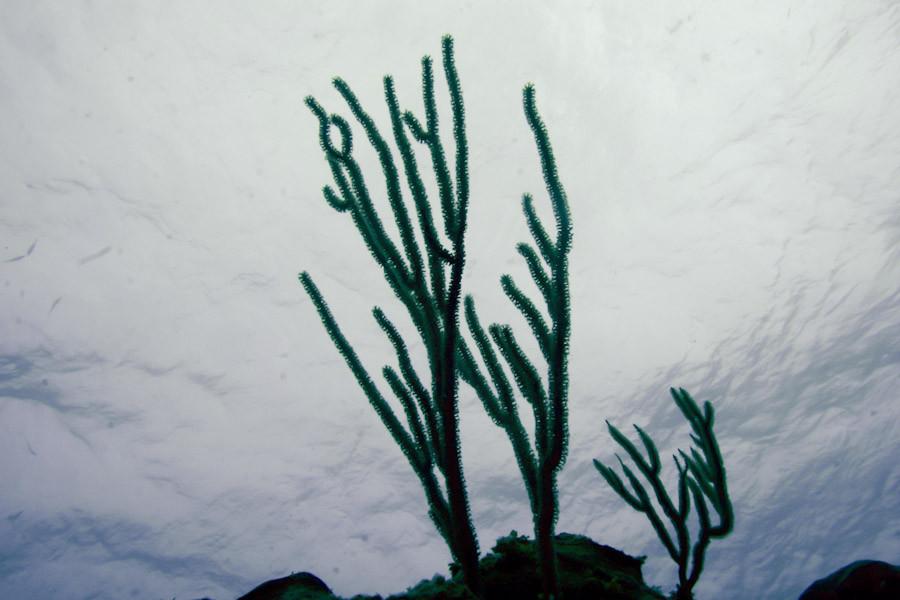 Giant Slit-Pore Sea Rod