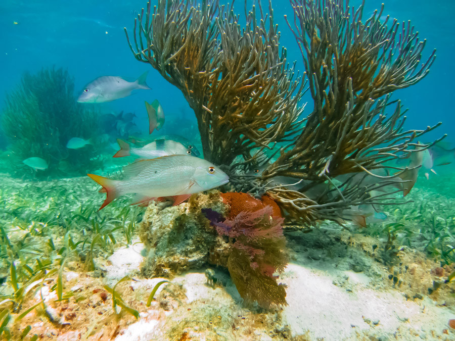 Shallow reef along Belize coast