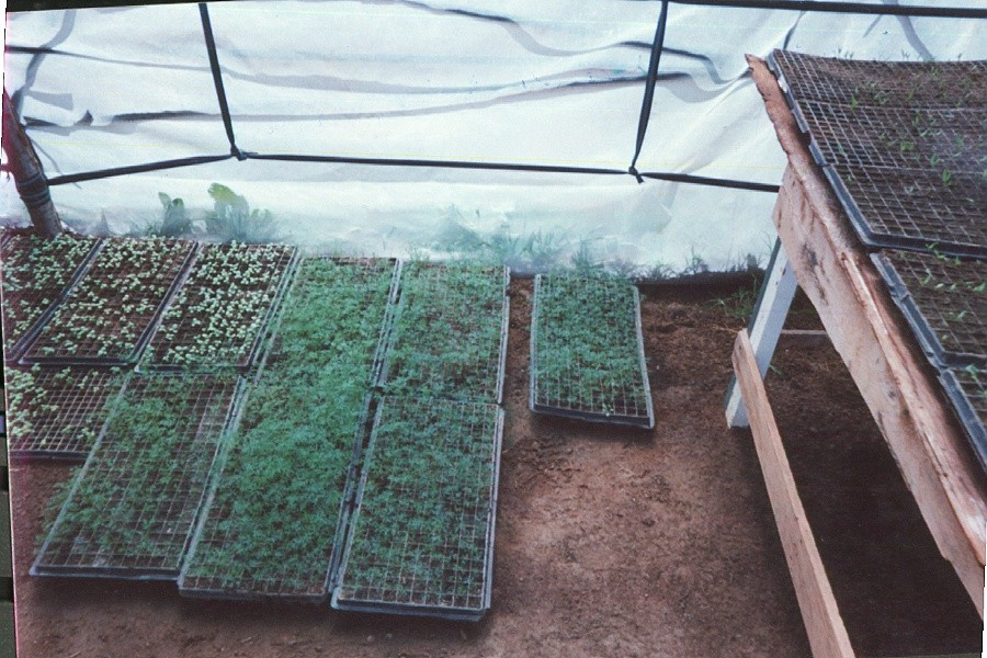 Seagate's broccoli sprout greenhouse