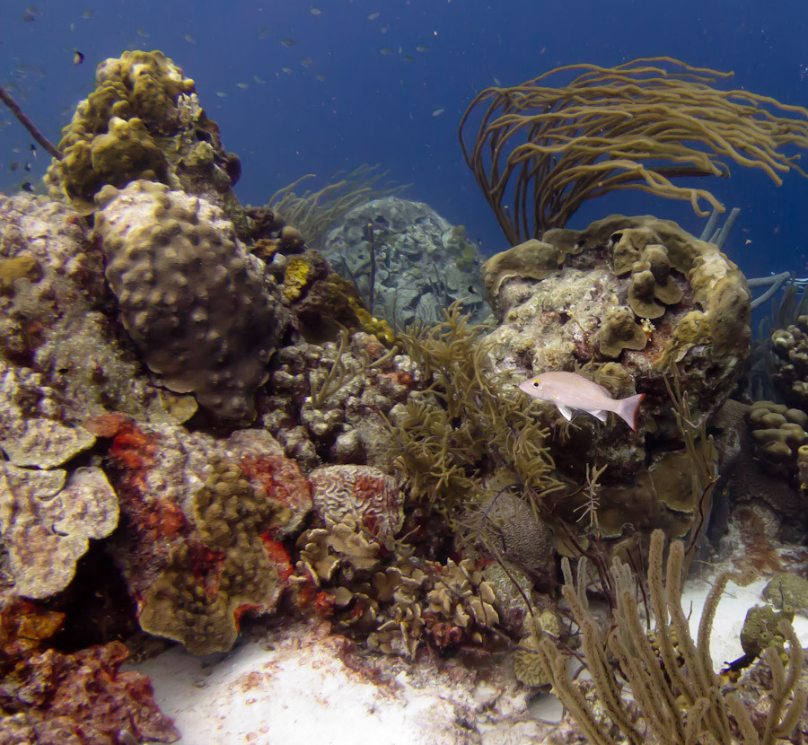Coral Reef off Bonaire
