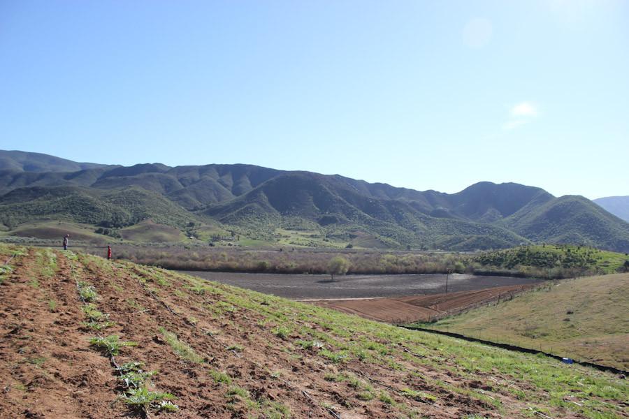 Seagate Carrot Farm, Baja California