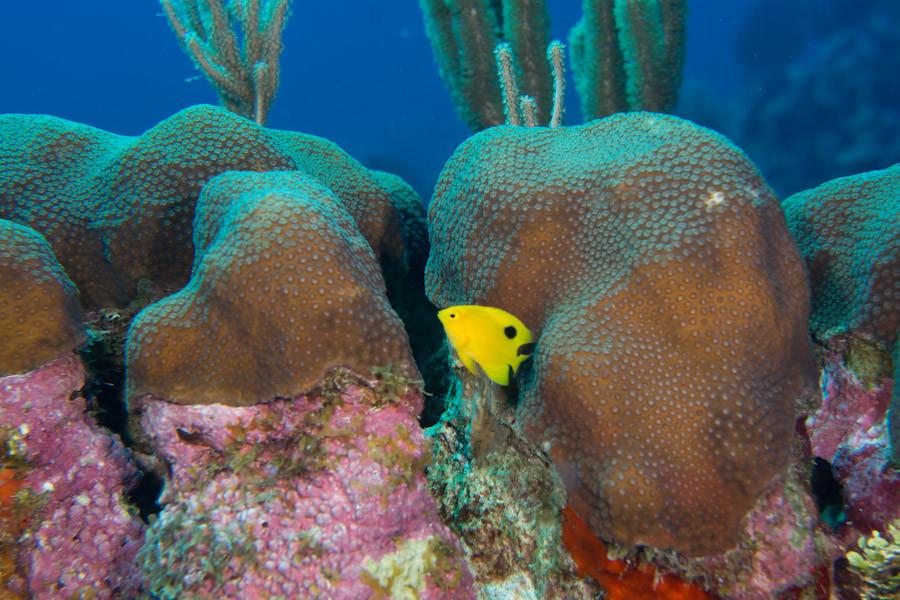 Coral garden off Belize