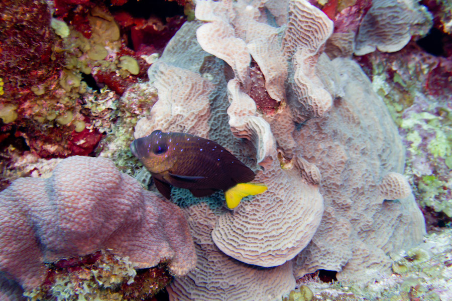 Fish hiding in coral