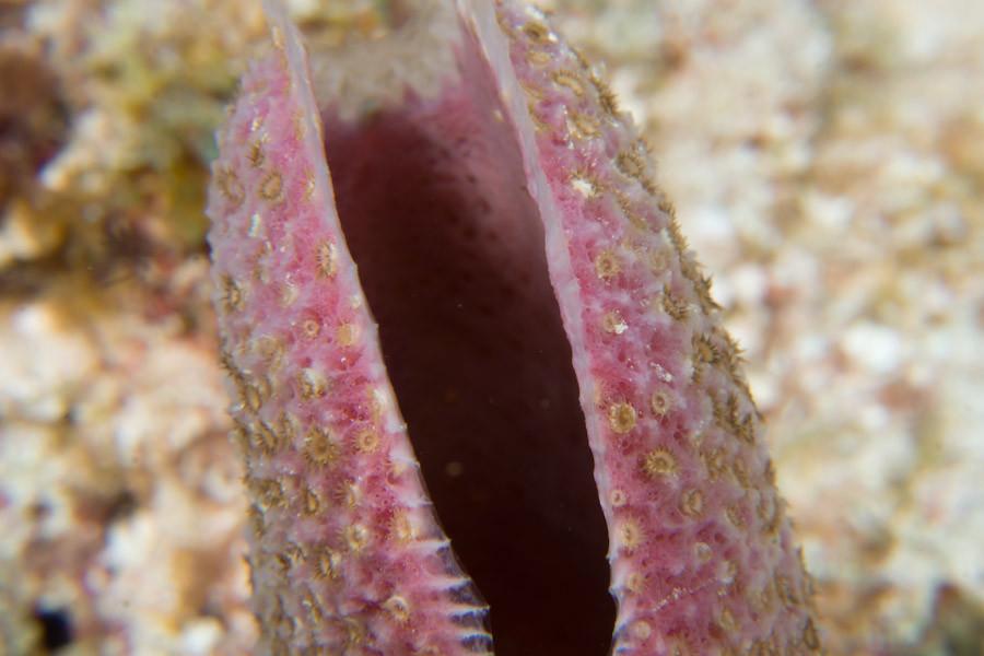 Colorful scallop shell