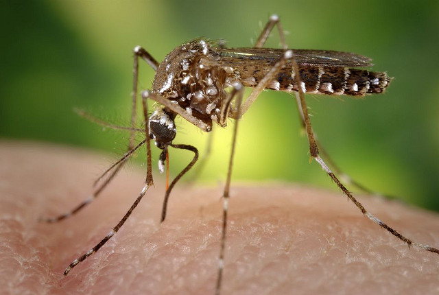 Natural Ways to Repel Mosquitoes This Summer