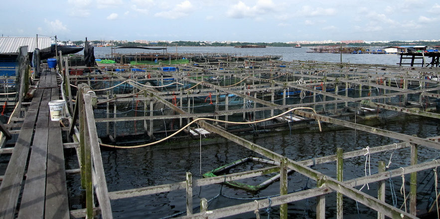 Dangers of Fish Farming & GMO Fish