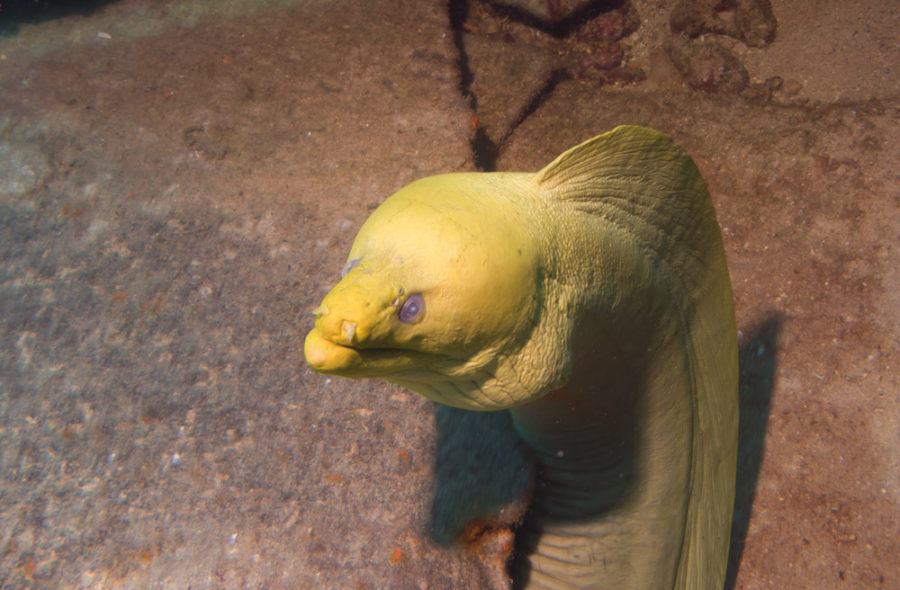 A bike is a faster way to escape Sr. Moray Eel when he gets hungry.