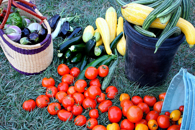 5 Fall Gardening Tips That Don't Involve Toxic Chemicals