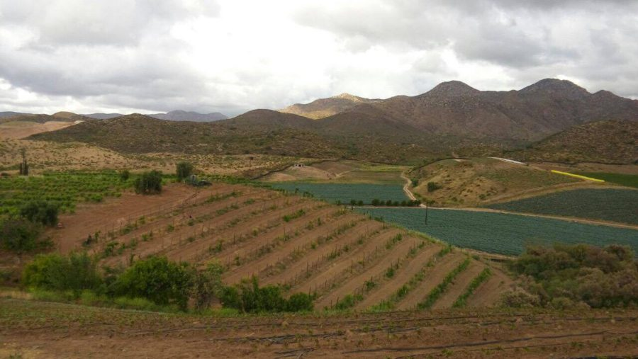 Baja California farming