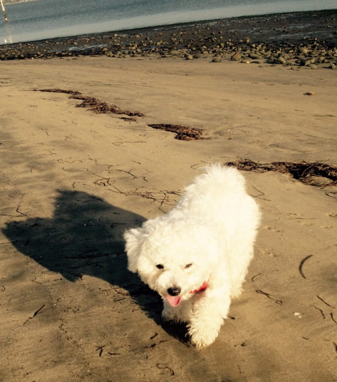 A cleaner version of the flying beach puppy before taking a swim