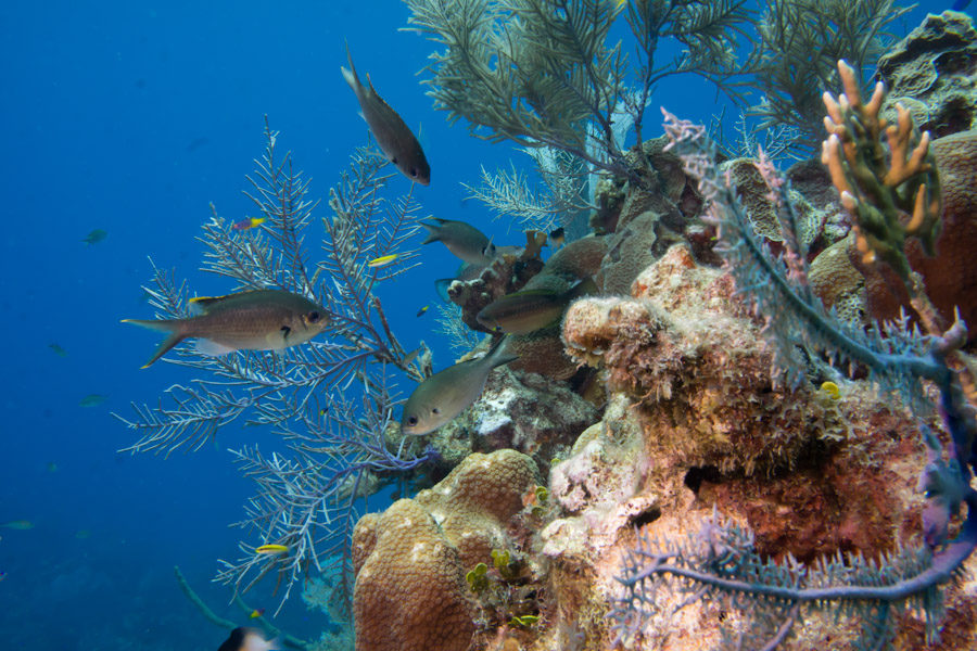 Healthy Caribbean tropical reef