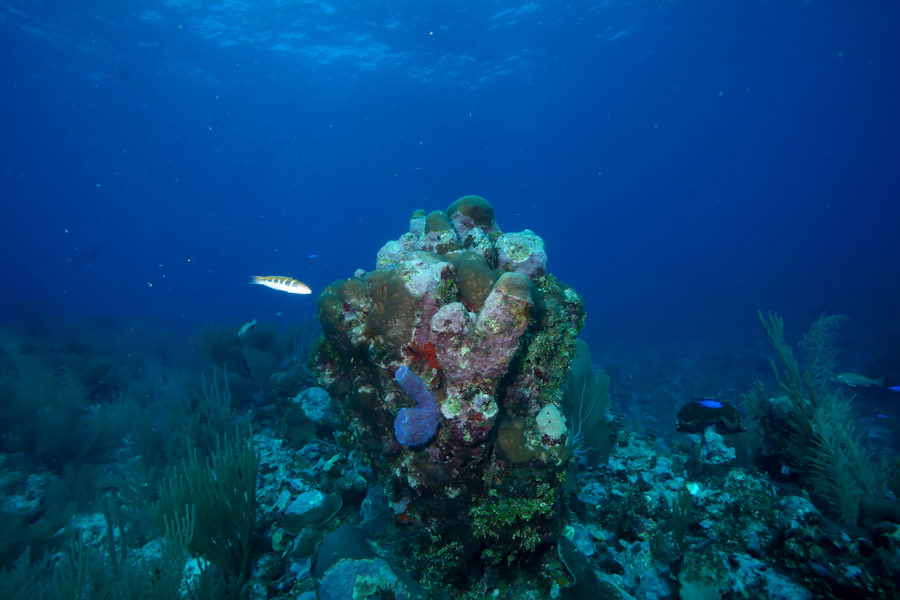 Healthy Coral Reef near Belize