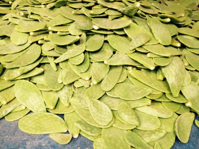 Nopal leaves unloaded in the Seagate plant