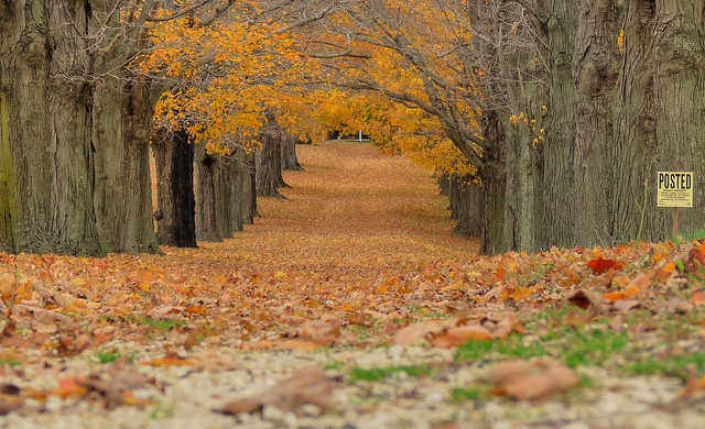 Common Fall Allergies and How to Fight Them Naturally
