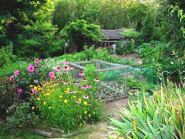 Summer Organic Garden Tips for Beautiful Blooms and Delicious Produce
