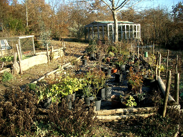 Tips for Preparing Your Organic Garden for Winter