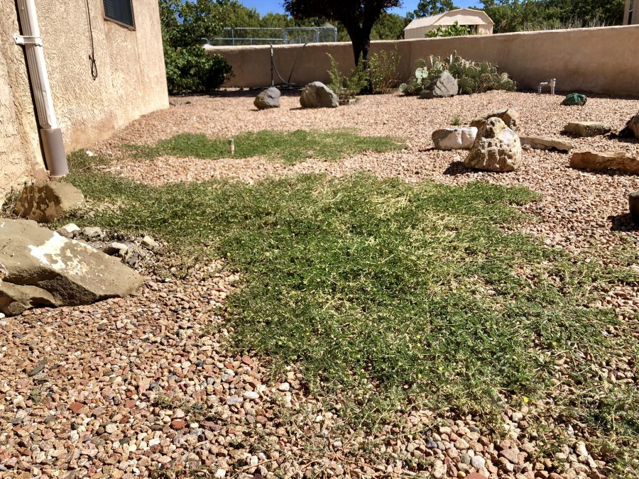 Natural and Eco-Friendly DIY Weed Control for Your Yard and Garden