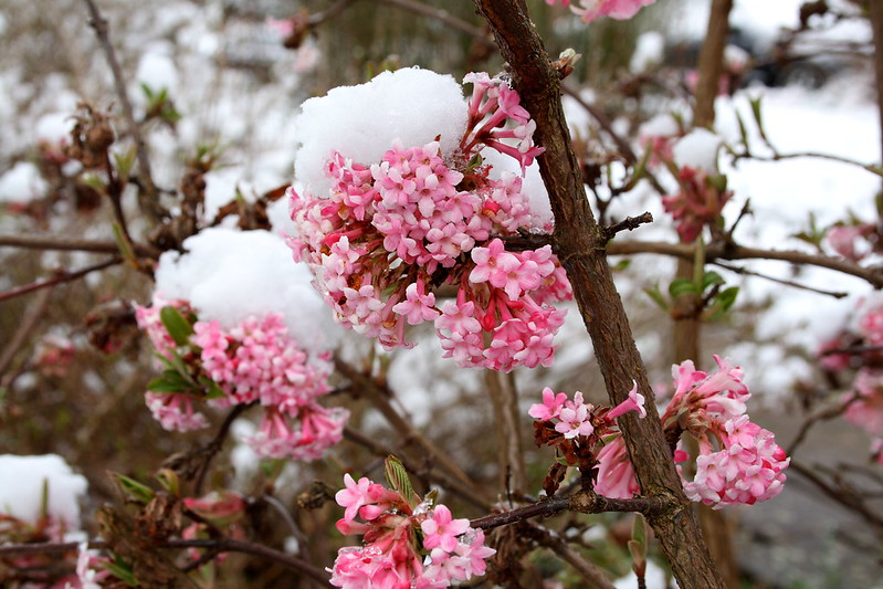 Easy Winter Landscaping Ideas for Your Home