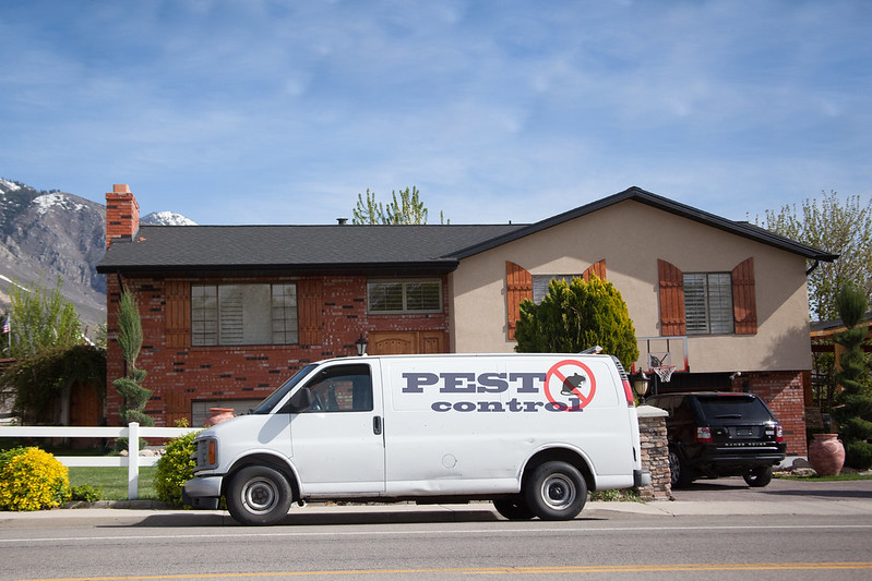 Chemical-Free Natural Pest Control Strategies for Your Home